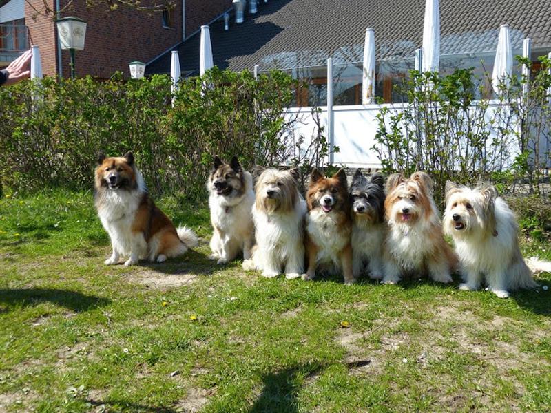 Tierisches Familientreffen