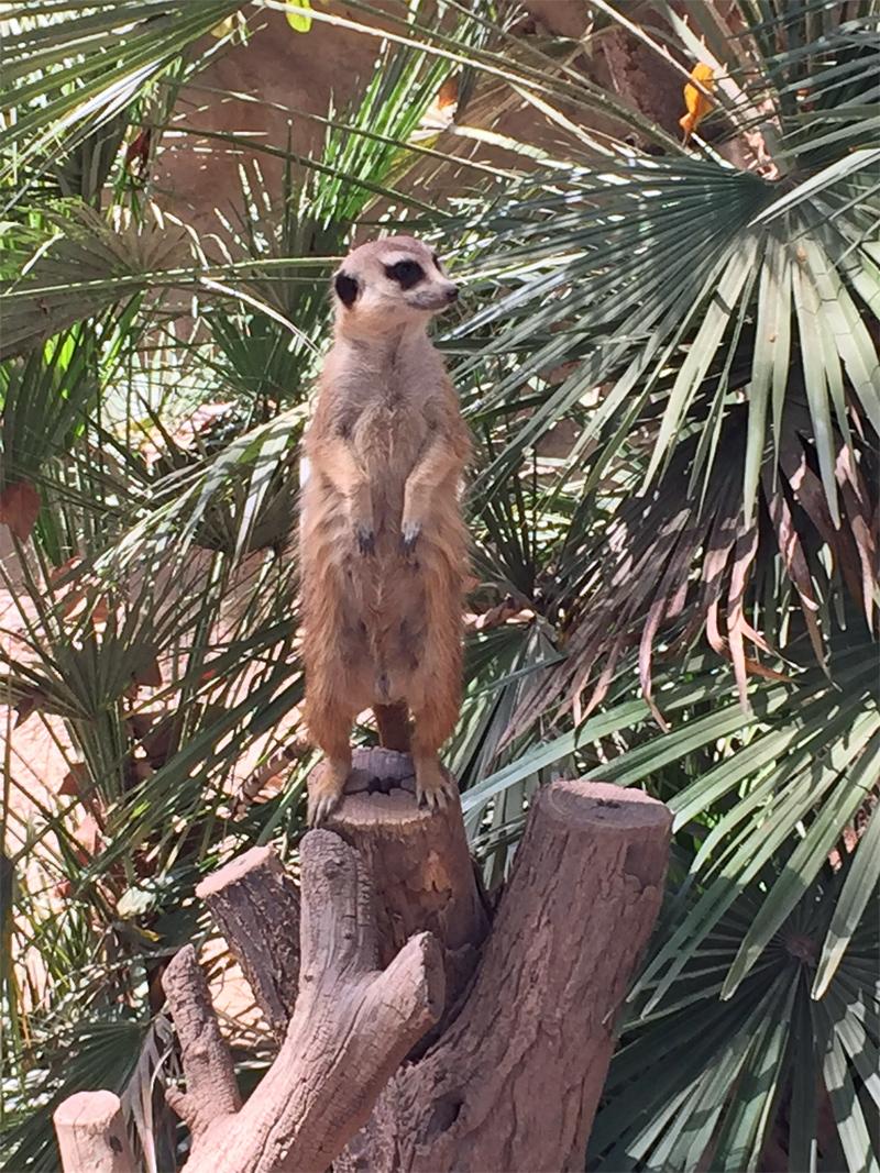 barcelona erdmann zoo jeckyl