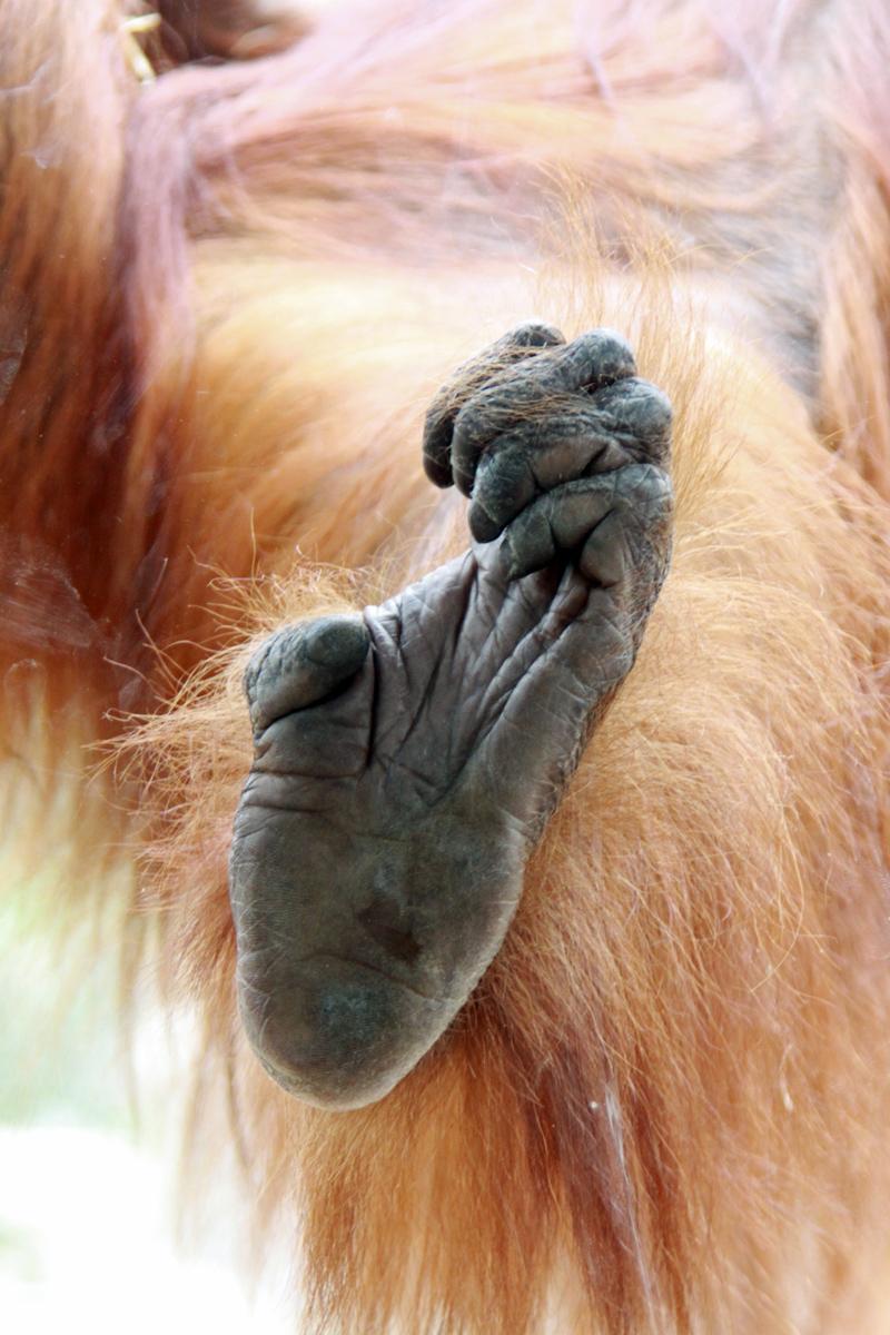 zoom gelsenkirchen deutschlandweit geocaching jeckyl orangutan fuss