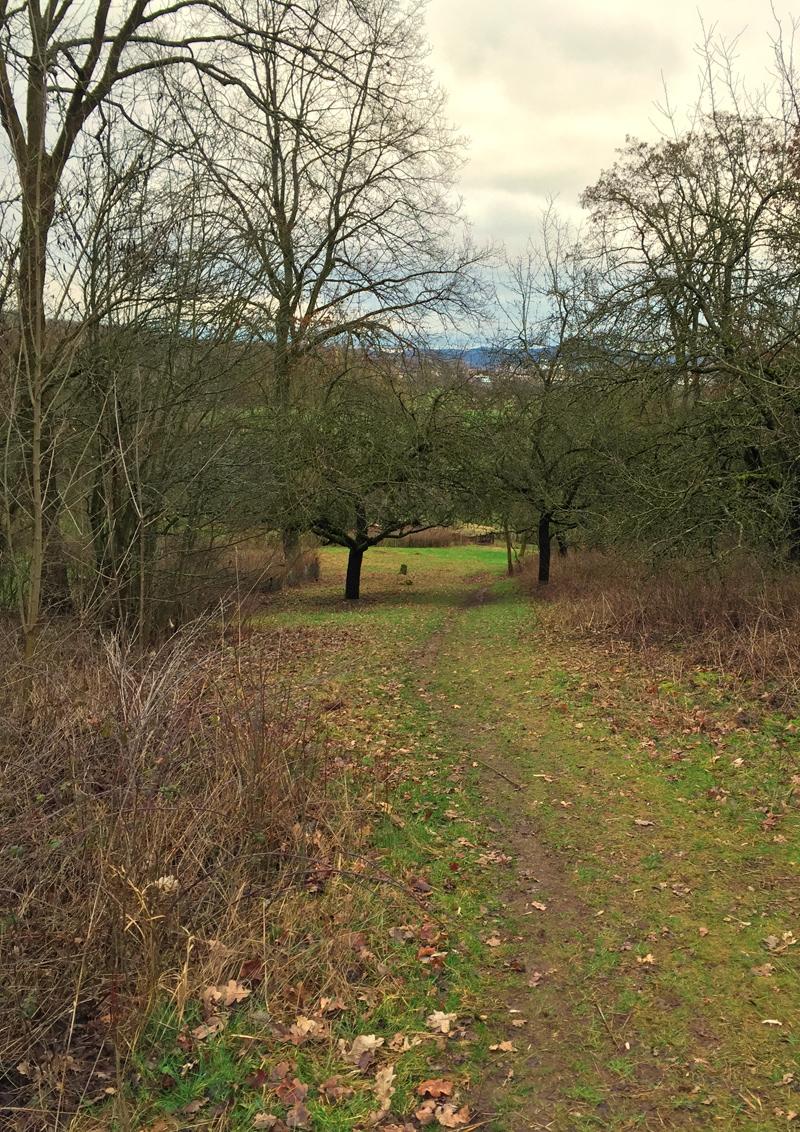 aschaffenburg deutschlandweit geocaching jeckyl kapellenberg